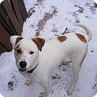 Adopt A Pet :: Jackie - Rigaud, QC