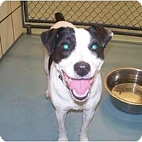Adopt A Pet :: Scarlett in Lufkin - Houston, TX