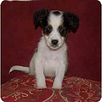 Adopt A Pet :: Chip - Chula Vista, CA