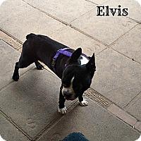 Adopt A Pet :: Elvis - Silsbee, TX