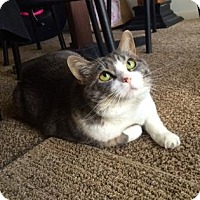 Adopt A Pet :: Anastasia - Fort Collins, CO