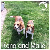 Adopt A Pet :: Kona and Maile - Pittsburgh, PA