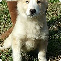 Adopt A Pet :: Zuzu - Hagerstown, MD