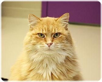 Cat Adoption Welland