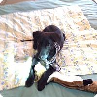 Adopt A Pet :: Emily - West Hartford, CT