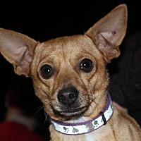 Adopt A Pet :: Pedro - Redlands, CA