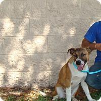 Adopt A Pet :: Dana - Oviedo, FL