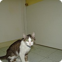 Adopt A Pet :: Archie - Marble, NC