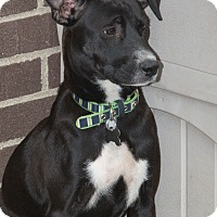 Adopt A Pet :: Luna - Elmwood Park, NJ