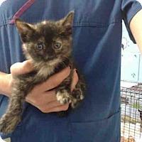 Adopt A Pet :: A493075 - San Bernardino, CA