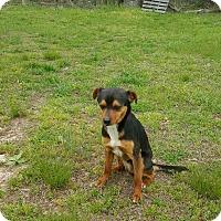 Adopt A Pet :: Davie meet me 5/13 - Manchester, CT