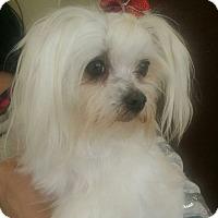 Adopt A Pet :: Sweetie - San Dimas, CA