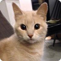 Adopt A Pet :: Kassia - Toronto, ON