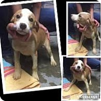 Adopt A Pet :: Logan - Rexford, NY