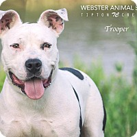 Adopt A Pet :: Trooper - Webster, TX
