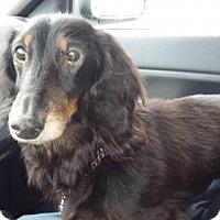 Adopt A Pet :: Mister - Westville, IN