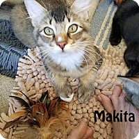 Adopt A Pet :: Minky and Makita - Redwood City, CA