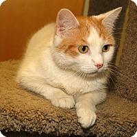 Adopt A Pet :: Flora - Milford, MA