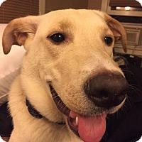 Adopt A Pet :: Emma - Coldwater, MI