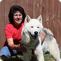 Adopt A Pet :: Dakota - Elyria, OH