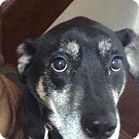 Adopt A Pet :: Jeter - East Hartland, CT
