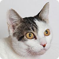 Adopt A Pet :: Diana - Walnut Creek, CA
