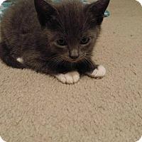 Adopt A Pet :: KOHL - Golsboro, NC