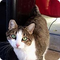 Adopt A Pet :: June Bugg - Kelso/Longview, WA