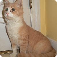 Adopt A Pet :: Orsino - Chattanooga, TN