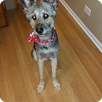 Adopt A Pet :: Norman - Aurora, IL