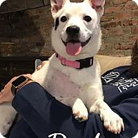 Adopt A Pet :: Peyton - Mobile, AL