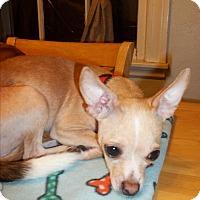 Adopt A Pet :: Thumper - Rockford, IL