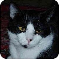 Adopt A Pet :: Otto - Portland, OR