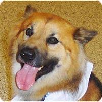 Adopt A Pet :: Cocoa - Orange Park, FL