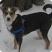 Adopt A Pet :: Patches - Hamilton, ON