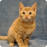 Adopt A Pet :: Hay You - Sacramento, CA