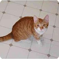 Adopt A Pet :: Greg - El Cajon, CA