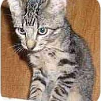Adopt A Pet :: Shadow - Dallas, TX