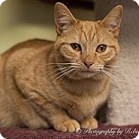 Adopt A Pet :: Neville - Byron Center, MI
