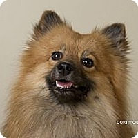 Adopt A Pet :: Jaime - Minnetonka, MN