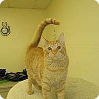 Adopt A Pet :: Rupert - Milwaukee, WI
