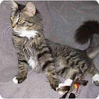 Adopt A Pet :: Rex - Modesto, CA