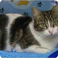 Adopt A Pet :: Baby Luv - Scottsdale, AZ