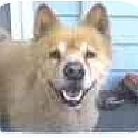 Adopt A Pet :: Loki - Dallas, PA