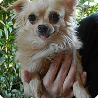 Adopt A Pet :: Edurado (Eddie) - Orange, CA
