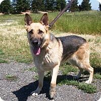 Adopt A Pet :: Maxine - Pleasant Grove, CA