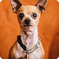 Adopt A Pet :: Harvey - Portland, OR