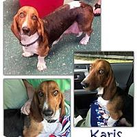 Adopt A Pet :: Karis - Marietta, GA