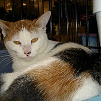 Adopt A Pet :: xena - Chino, CA