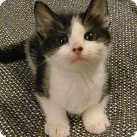 Adopt A Pet :: Marbles - Covington, KY